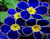 פרחים נדירים
