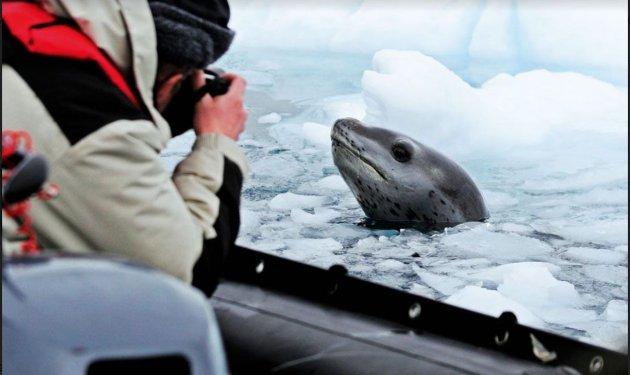 תמונות מהקוטב