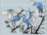 ציפורי גן עדן