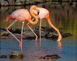 חיות בר בגאלאפאגוס