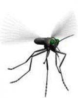 די.די.טי. וקוטלי חרקים